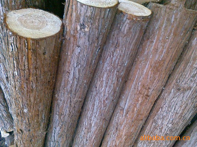 供应优质松木原木