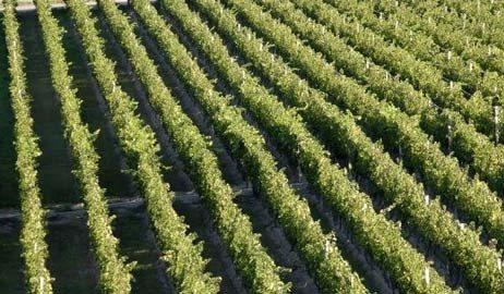 阿根廷葡萄园