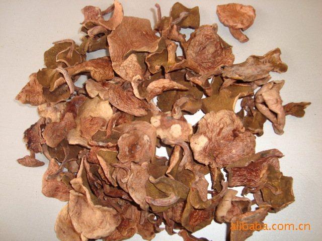 各种野生蘑菇图片