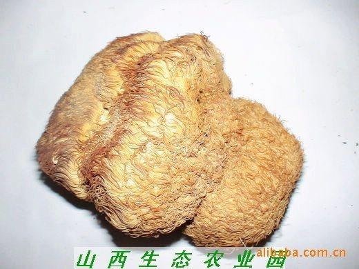 菌菇类图片_