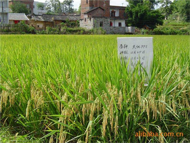 安徽芜湖的六郎镇(实景拍摄)
